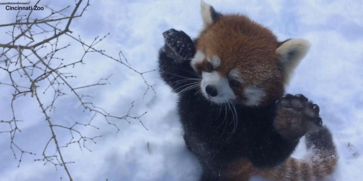 Image Credit: Cincinnati Zoo