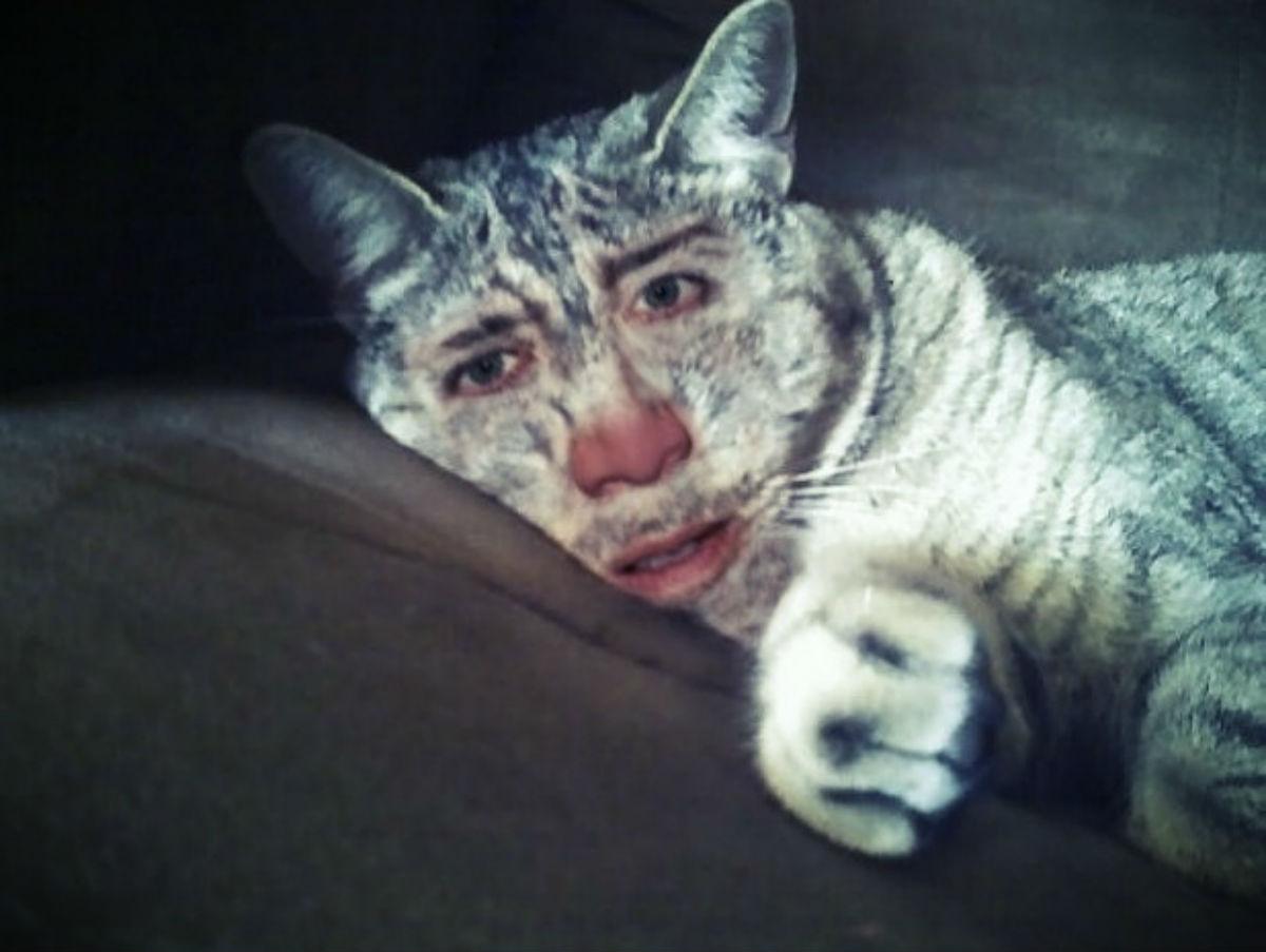 Nicolas Cage Cat Meme