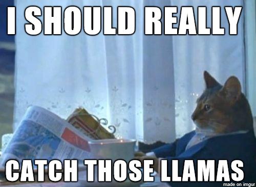 cat-llama