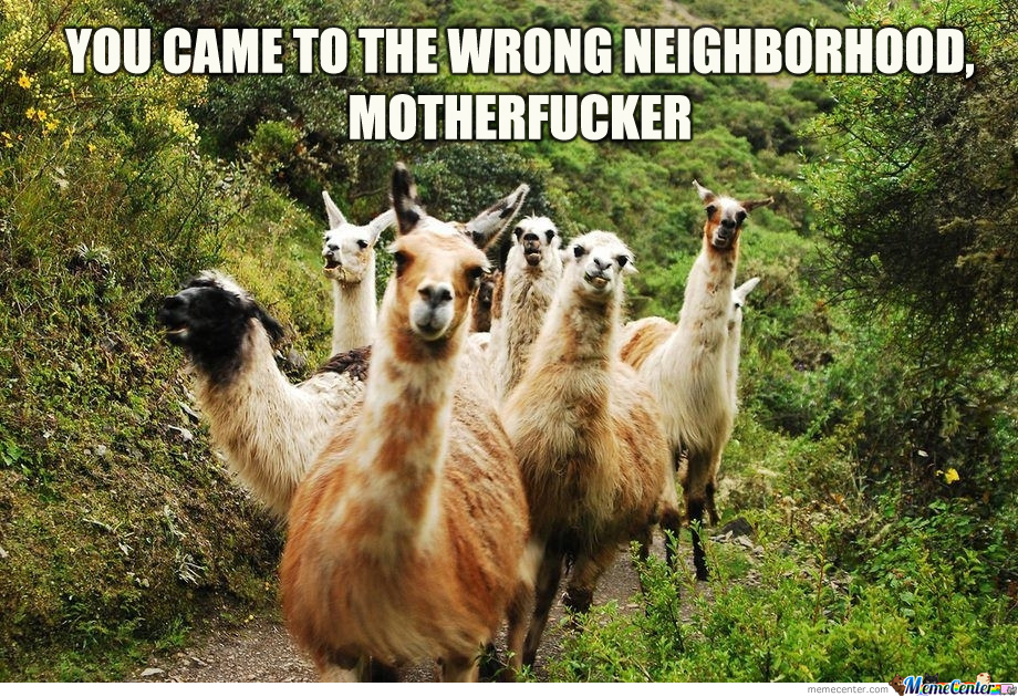 Funny Llama Memes If You Dont Need No Drama - If you hate humans you can now invite llamas to your wedding instead