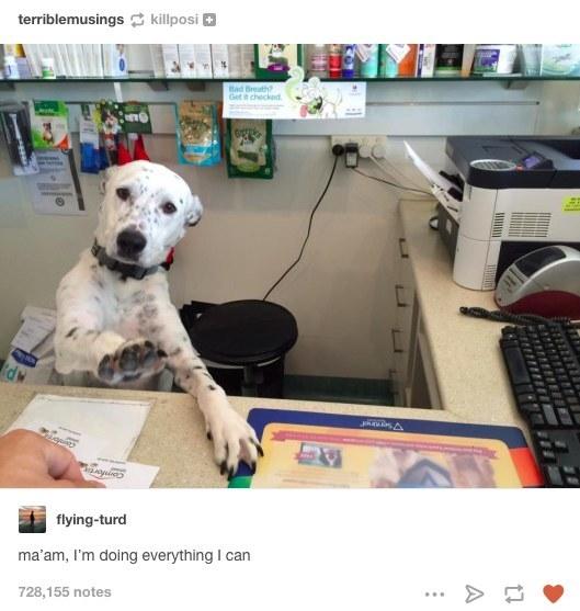 Finally! A List Of The Best-Ever Dog Photos