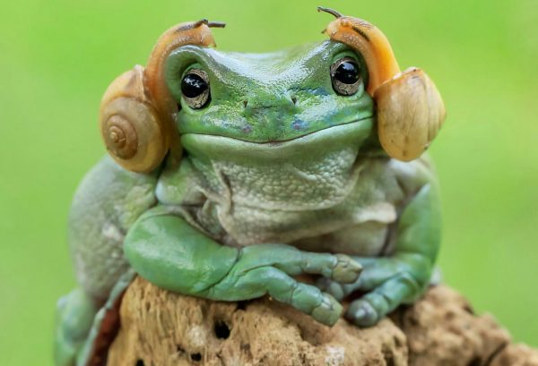 princess-leia-frog-snails-photoshop-battle-original