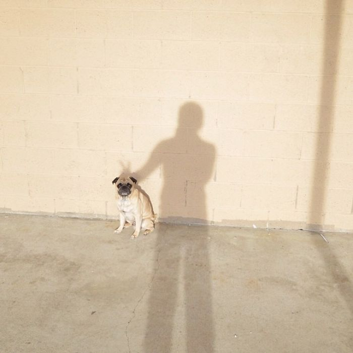 pug-norm-adventures-jeremy-veach-142-5821a3114032e__700