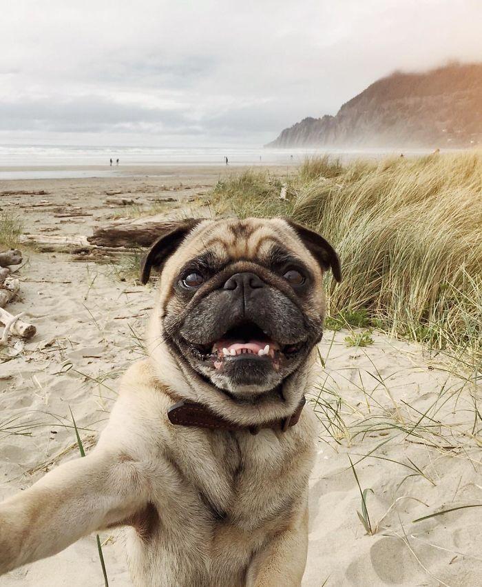 pug-norm-adventures-jeremy-veach-18-5821a1dabc402__700