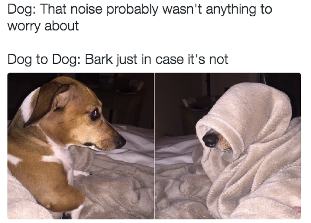 These Memes Will Make Any Dog-Owner Feel More Related Than Ever