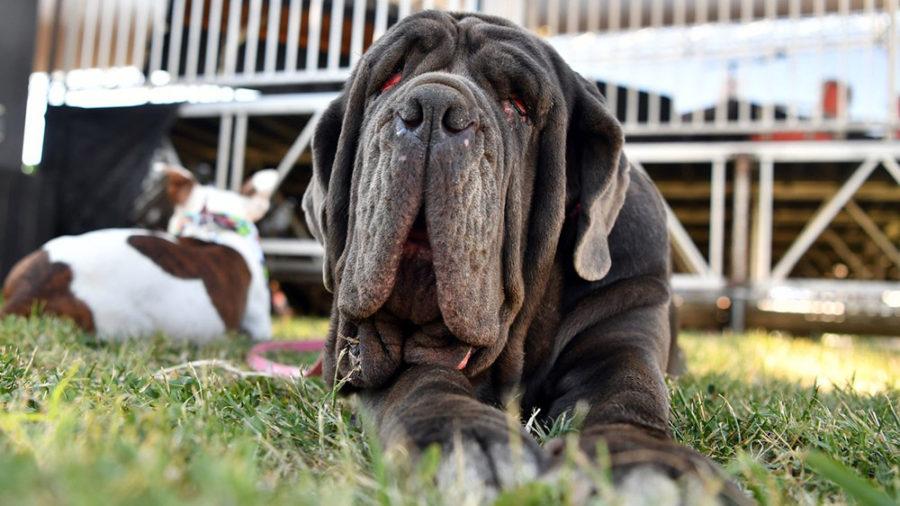 martha world ugliest dog
