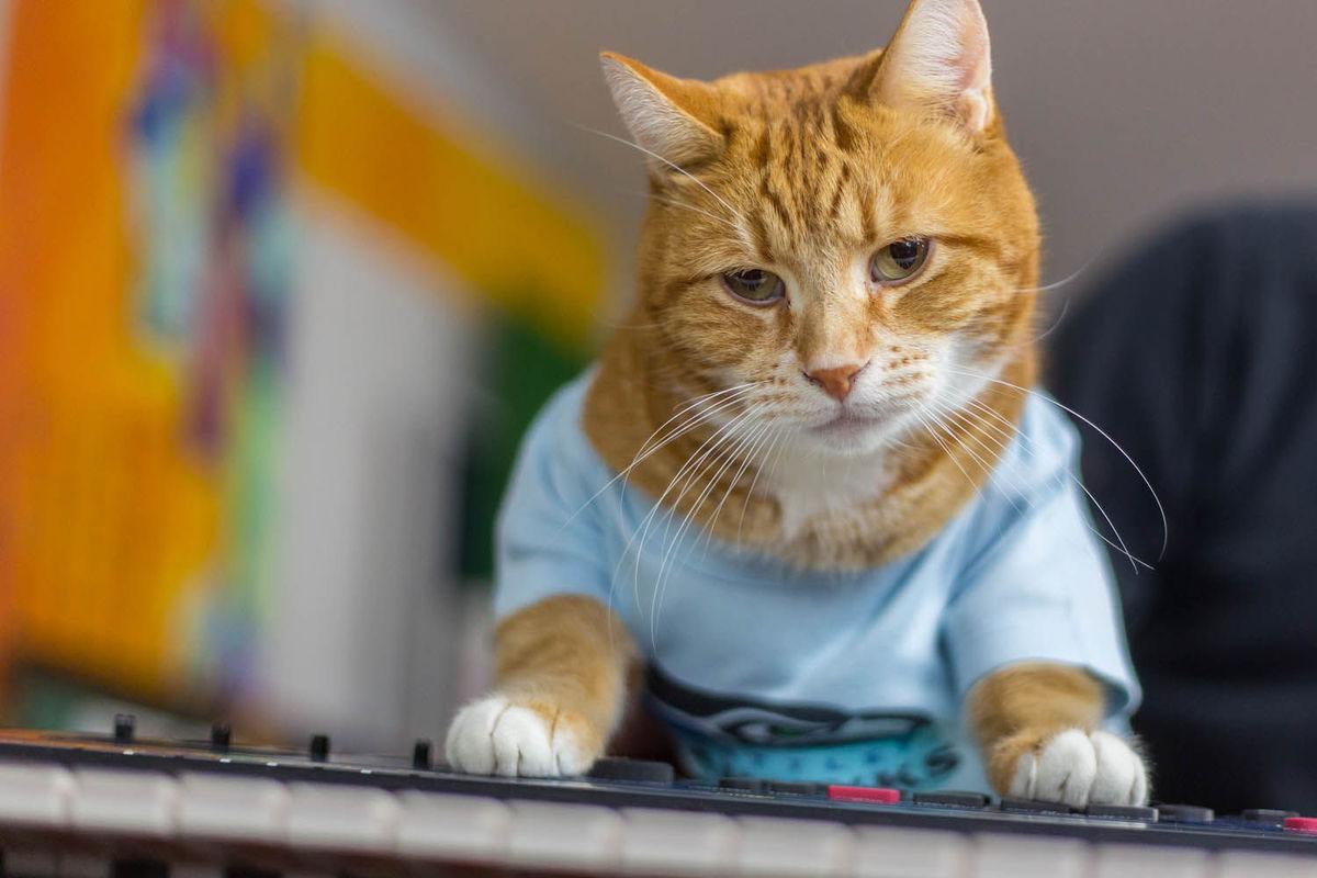 Youtube Keyboard Cat Pistachio