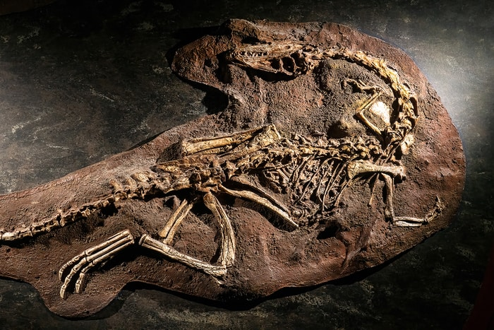Scientists Find Meat-Eating Feathered Dinosaur That Lived 67 Million Years Ago