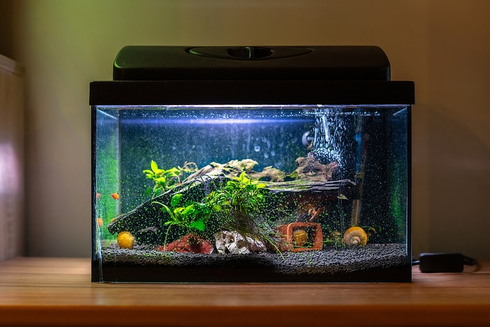 Common Fish Tank Problems and How to Fix Them