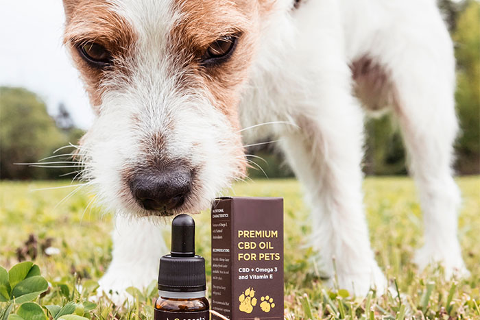 How To Decide the Dosage of CBD Oil For Dogs