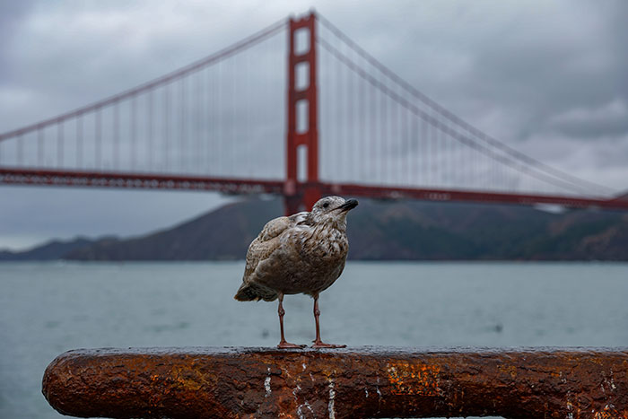 Research Shows San Francisco Birds Are Positively Affected By the Pandemic