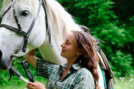 How to Take a Great Care of Your Horses