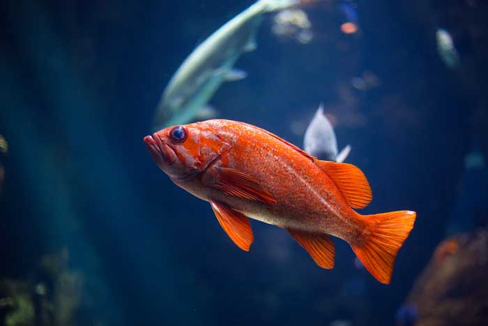 Ever Wanted To Own A Fish? Here's Everything You Need To Know