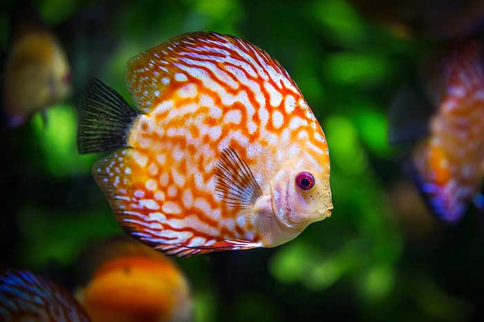 What You Should Know About Self Cleaning Aquariums