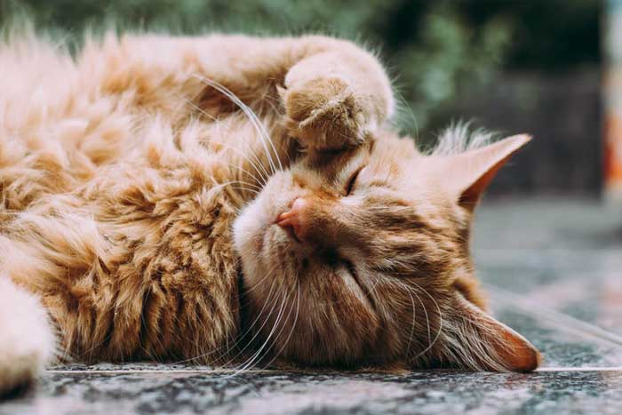 4 Nurturing Tips About Your Cat's Health You Need To Know